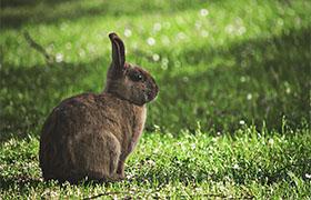 草食動物のウサギ